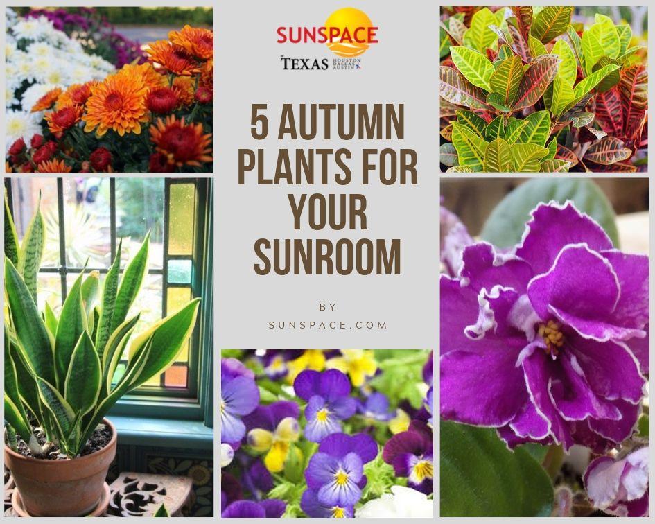 5 Autumn Plants For Your Sunroom Sunspace Sunrooms